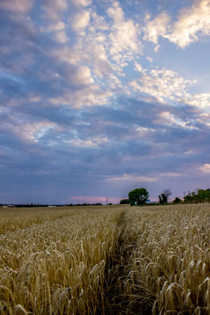 agricultural area: Sunset at the agricultural area