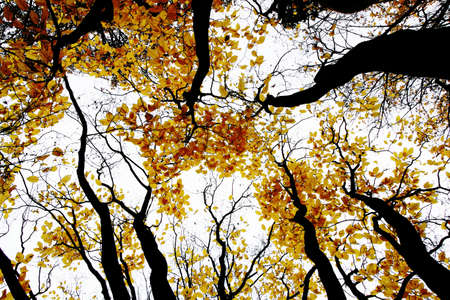 contrasty: contrasty drawing-like photo of autumn forest