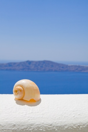 A seashell on a ledge with ocean background photo