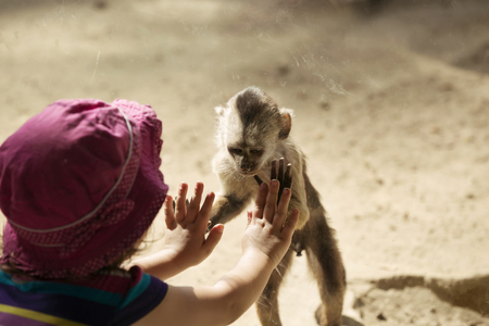 Monkey Playing with cute little girl Stock Photo