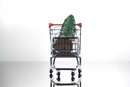 Front View of Mini Christmas Tree Inside Tiny Shopping Trolley on Light Background