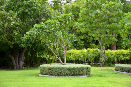 Beautiful garden 스톡 콘텐츠