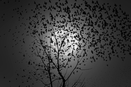 Background image of a flock of birds flying in the moonlight photo