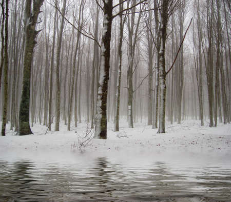 snow falls: The first snow falls on rivers and lakes in the forest Stock Photo