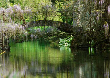 jardines con flores: Un puente cubierto de glicinas crea reflejos de colores en el río