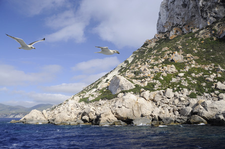 vedra: View of rocks and seagulls flying over the coast of Es Vedr island in Ibiza