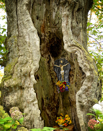 bible flower: In mountain italian village, a small statue of the crucified Christ was placed for devotion in the hollow trunk of an old chestnut Stock Photo