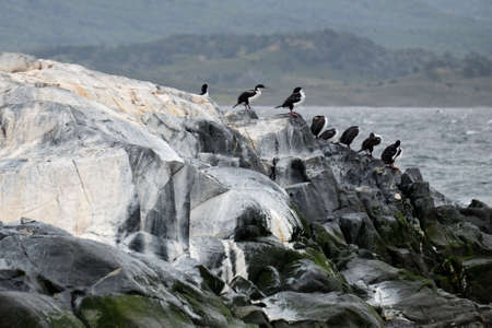 Cormorants standing on a rock in the Beagle channel, Ushuaia, Argentina