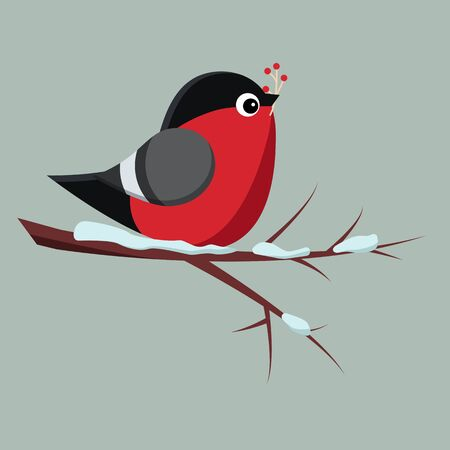 Isolated bird bullfinch sitting on snowy branch of rowan-tree with bunch of red rowanberry. Vector illustration in cartoon flat style.