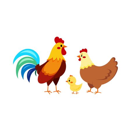 Rooster cock with hen and chick isolated on white background. Cute farm birds family flat design cartoon style vector illustration. Funny poultry chicken family. Illusztráció