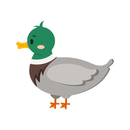 Duck bird isolated on white background. Cute farm bird flat design cartoon style vector illustration. Funny poultry duck icon.