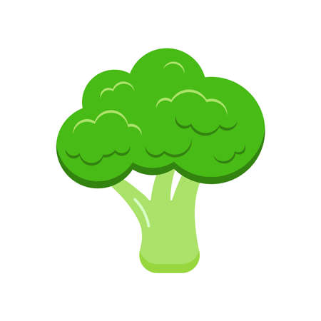 Broccoli fresh vegetable icon isolated on white background. Flat design cartoon style fresh gmo free green organic vegetable vector illustration. Vegan and diet healthy food symbol.