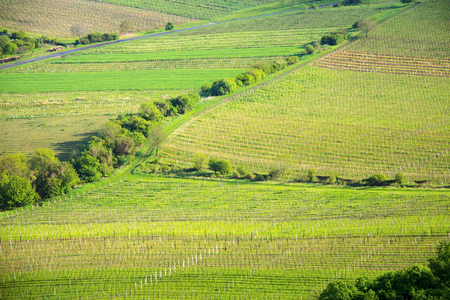 View of a vineyard in the Palava region of South Moravia on a sunny spring day Stock Photo