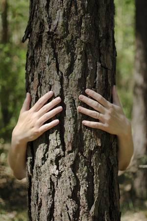 environmentalist: Close-up view of female hands embracing tree trunk in forest