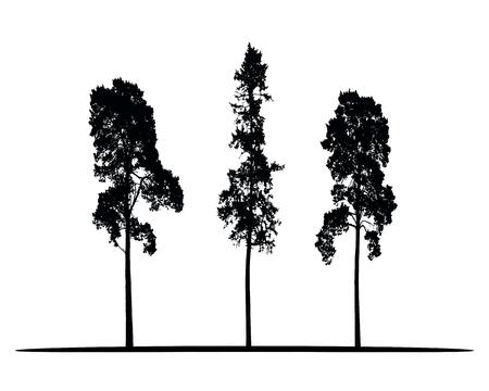 Conjunto de siluetas vectoriales de árboles coníferos altos aislados sobre fondo blanco