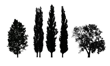 흰 배경에 고립 된 낙엽 나무의 현실적인 벡터 실루엣 세트 일러스트