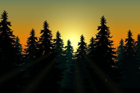Landscape with coniferous forest under morning sky at dawn and sunlight - vector Illustration