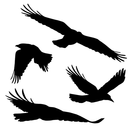 Set of vector silhouettes of flying birds, isolated on white background Vettoriali