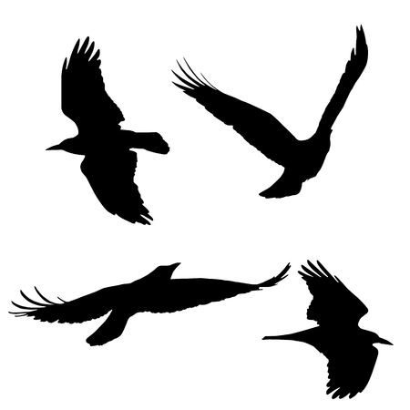 Set of vector silhouettes of flying birds, isolated on white background Illustration