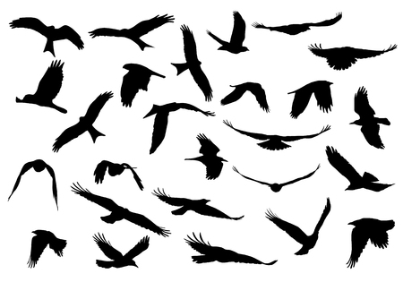 Set of realistic vector illustrations of silhouettes of flying birds of prey isolated on white background