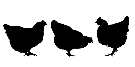 Realistic silhouettes of three hens and chickens - isolated vector on a white background Vectores