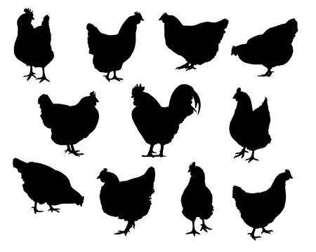 Conjunto de siluetas realistas gallinas y pollos vector aislado sobre un fondo blanco.