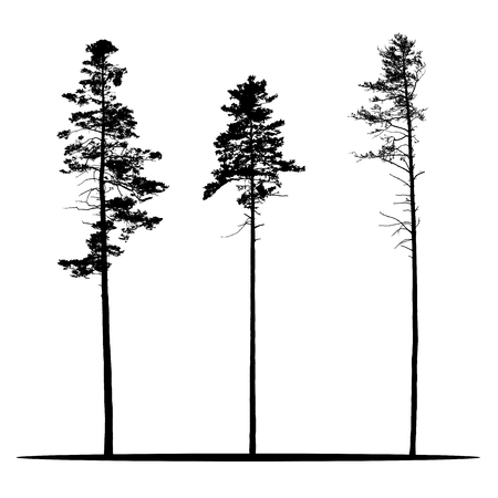 Set of realistic vector silhouettes of coniferous trees - isolated on white background