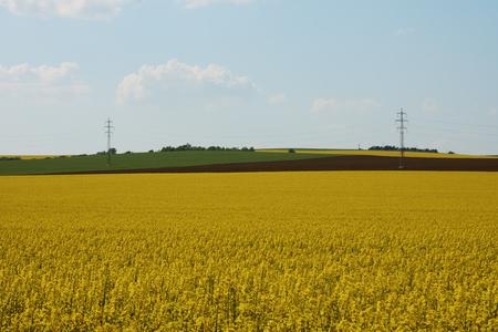 Rape field in farmland under blue sky with clouds, in South Moravia, in the Czech Republic - Europe Stock Photo