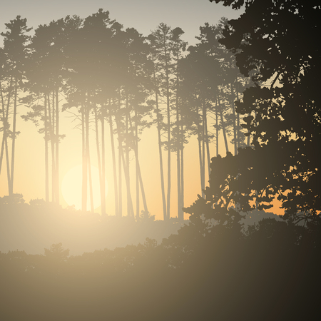 Illustration of a coniferous forest with the rising sun under the morning sky