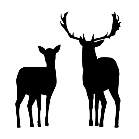 Vector silhouettes of deer and hind, isolated on a white background Stock Vector - 101007016