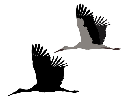 Silhouette of flying stork, isolated on white background - vector