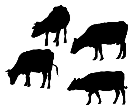 Set of realistic silhouettes of cow, isolated on white background - vector Иллюстрация