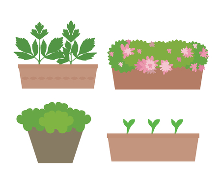 Set of flat design boxes and pots with colorful flowers and vegetables, isolated on white background - vector