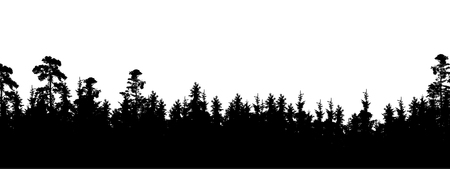 Realistic silhouette of tree top in coniferous forest, with space for text - vector, Isolated on white background