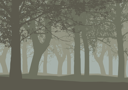 Realistic illustration of a deciduous deep forest with trees and with mist gray sky - vector Banque d'images - 127263524
