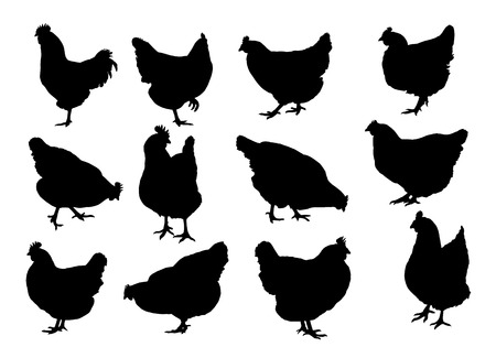 Set realistic silhouettes of three hens, rooster or chickens, pecking and walking - vector