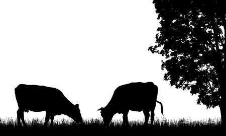 Realistic illustration with two silhouette of cow on pasture, grass and tree, isolated on white background - vector