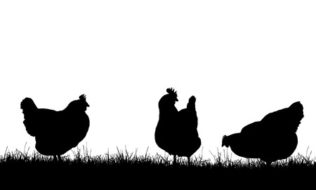 Realistic illustration with three silhouettes of hens on pasture with grass, isolated on white background - vector