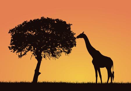 Siluetta della giraffa, dell'erba e dell'albero nel paesaggio di safari africano. Cielo arancione con spazio per il testo - vettore