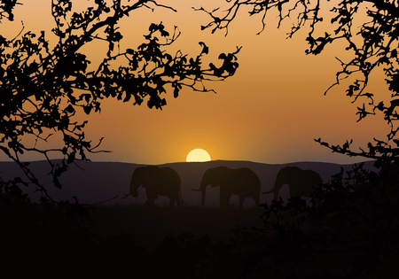 Realistic illustration of silhouettes of three elephants. They go in savanna with saffron grass in africa. Branches of trees with the orange sun set in the background - vector Illustration