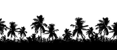 Pattern or background with realistic silhouette of tree tops, tropical palm trees, isolated on white background with space for text - vector