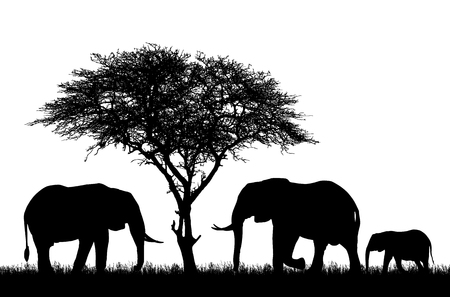 Realistic illustration with silhouette of three elephants on safari in Africa. Acacia tree and grass isolated on white background - vector