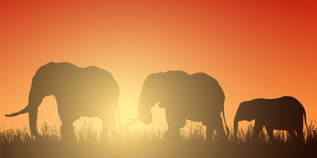 Realistic illustration with silhouette of three elephants on safari in Africa. Grass and red-orange sky with rising sun - vector Illustration