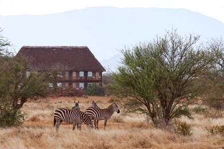 View of herd of zebras in African safari with dry grass and trees on savanna, with lodge in background Banque d'images - 126120335
