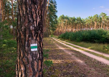Look at the forest with coniferous trees, a footpath and a hiking sign on a trunk under a blue sky. Banque d'images - 128433687