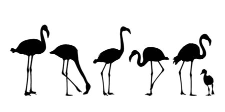 Set of realistic water bird silhouettes of flamingo, isolated on white background - vector