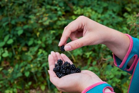Young woman holding in hand a pile of blackberries with blurred forest on background Фото со стока