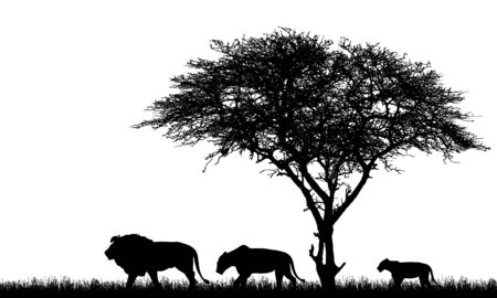 Realistic illustration of silhouette African safari landscape with tree, lions family, lioness and lion cub and grass on savanna - vector