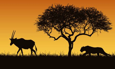 Realistic illustration of a creeping lion and gazelle or antelope silhouettes. The feline hunts for an oryx. Safari landscape with grass, tree and orange sky - vector