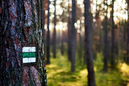 Photo of green tourist sign or mark on tree bark in forest with sunlight.